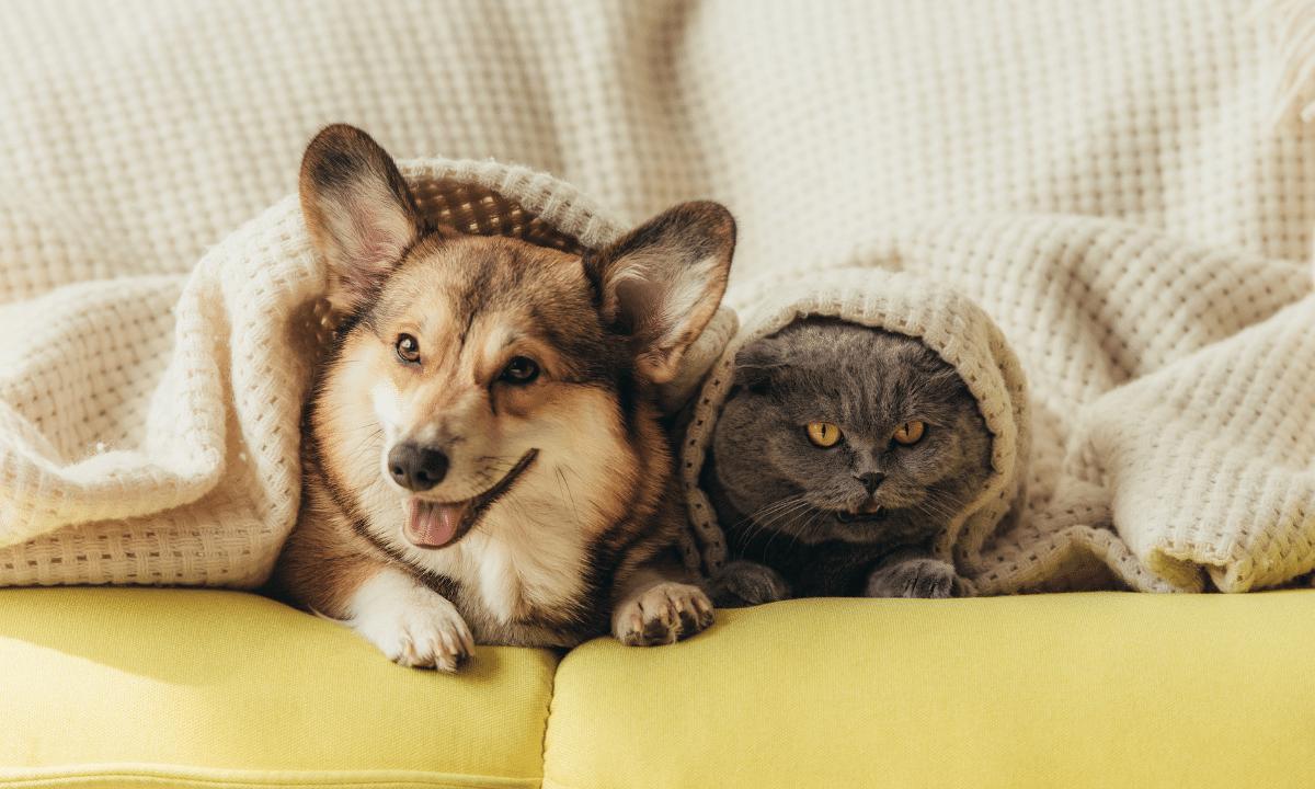 pet-friendly buildings