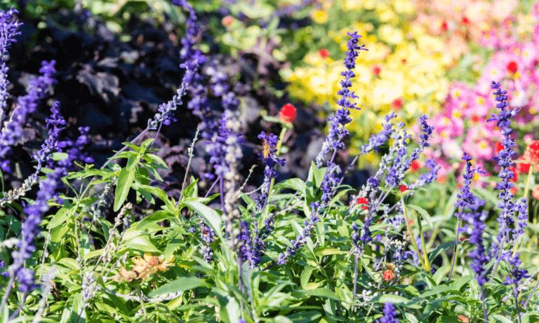 community garden nyc